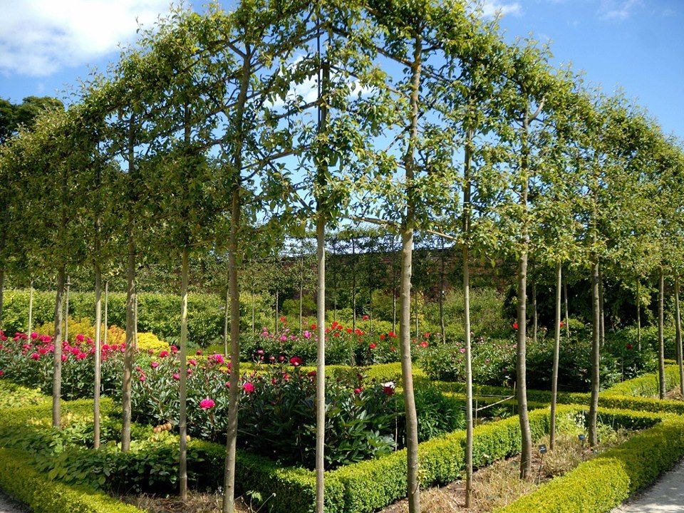 Alnwick Gardens In The Uk Has An Ornamental Garden That Features Pleached Crab Apple Trees With Low Box Hedging S Gardens Of The World Garden Fence Landscaping