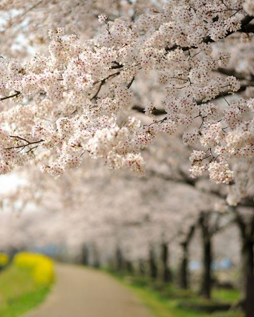 Pin By Tempo Da Delicadeza On Pathways Tree Photography Spring Flower Art Flowers