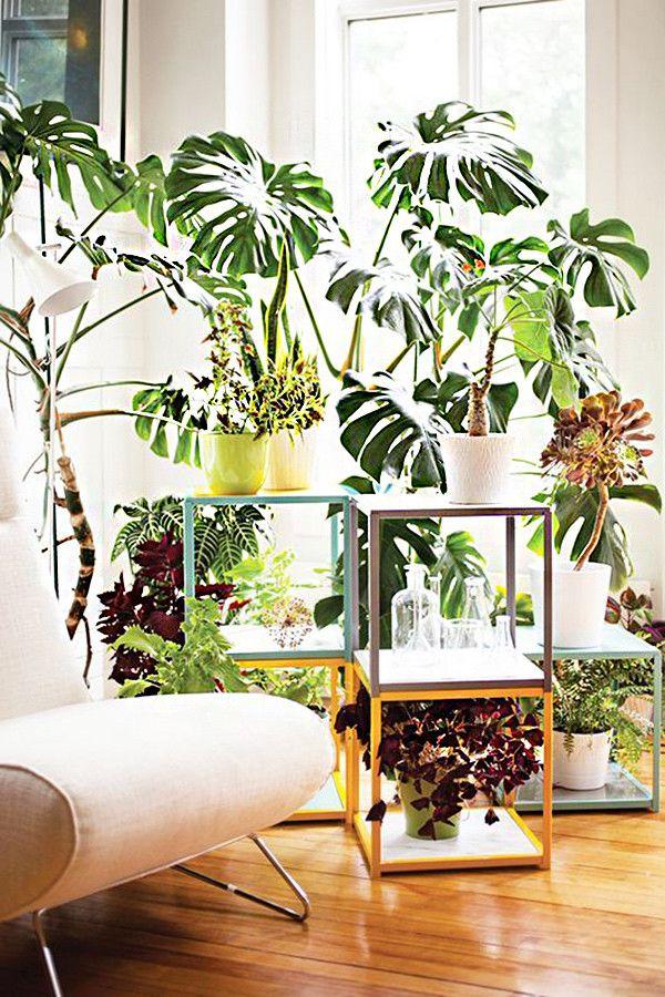 17 Ideas Para Decorar Tu Sala De Estar Con Plantas En Esta Primavera Plantas De Interior Decoracion Plantas Plantas