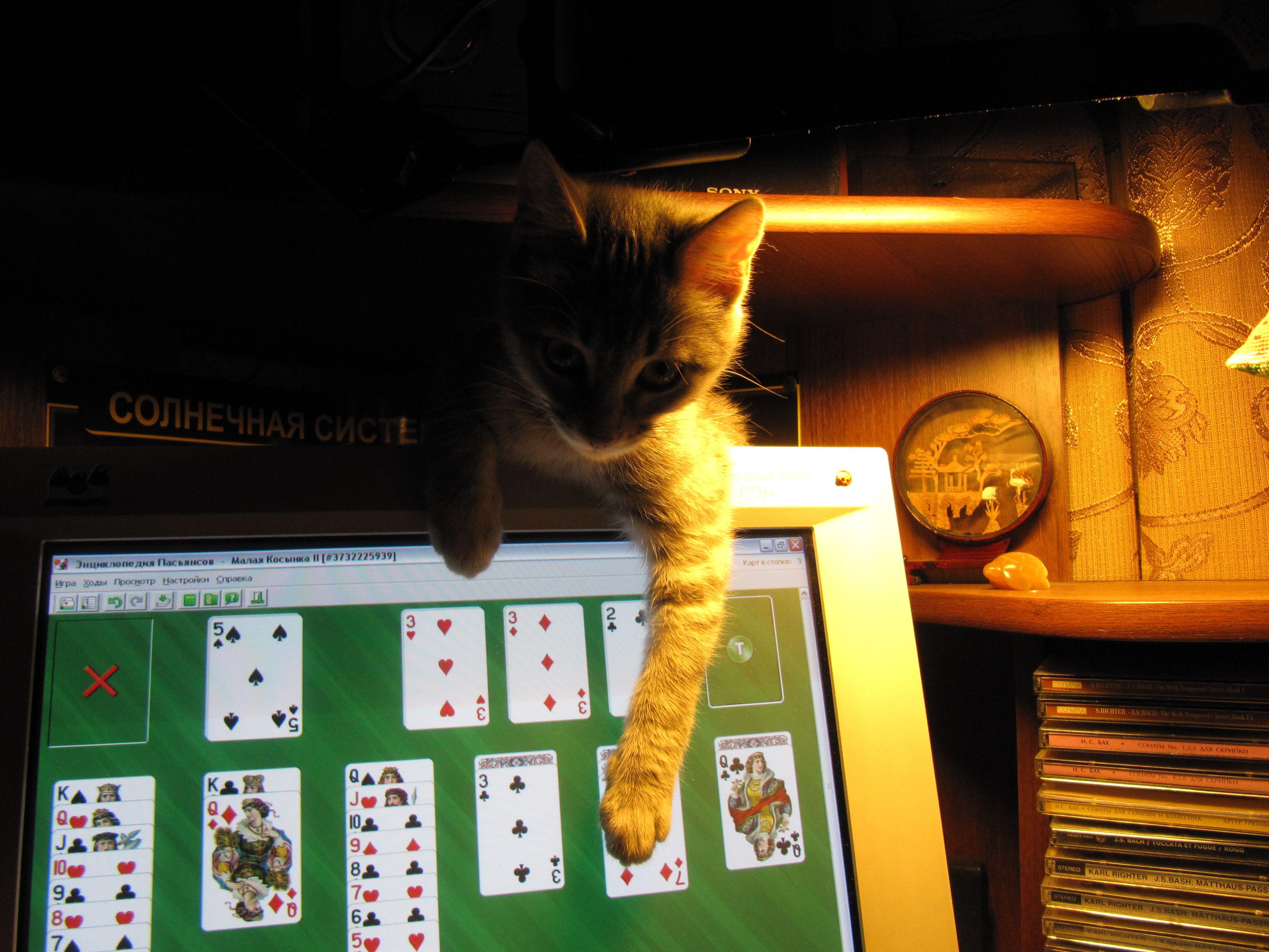 в играть в кота карты в как