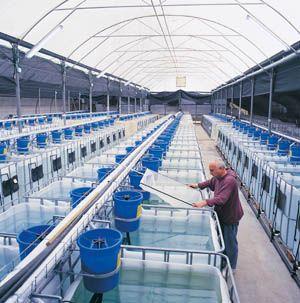 Pic Example Aquaponic farming techniques Fish Farm Tank ...