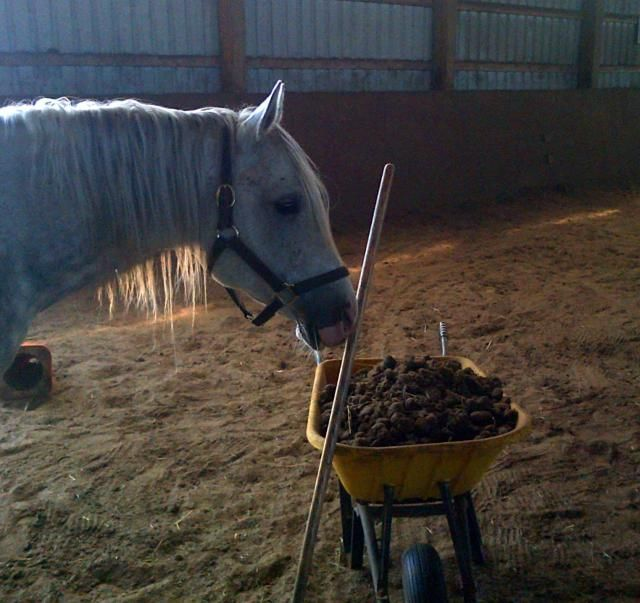 9 Things You Didn't Know About Horse Manure | Horse Manure