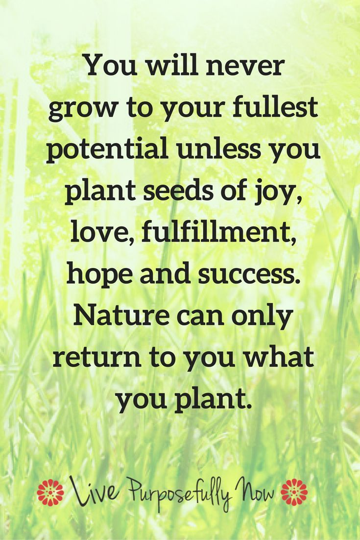 Quotes About Planting Seeds For Life Pleasing Letting Go How To Make Your Life More Awesome  Success