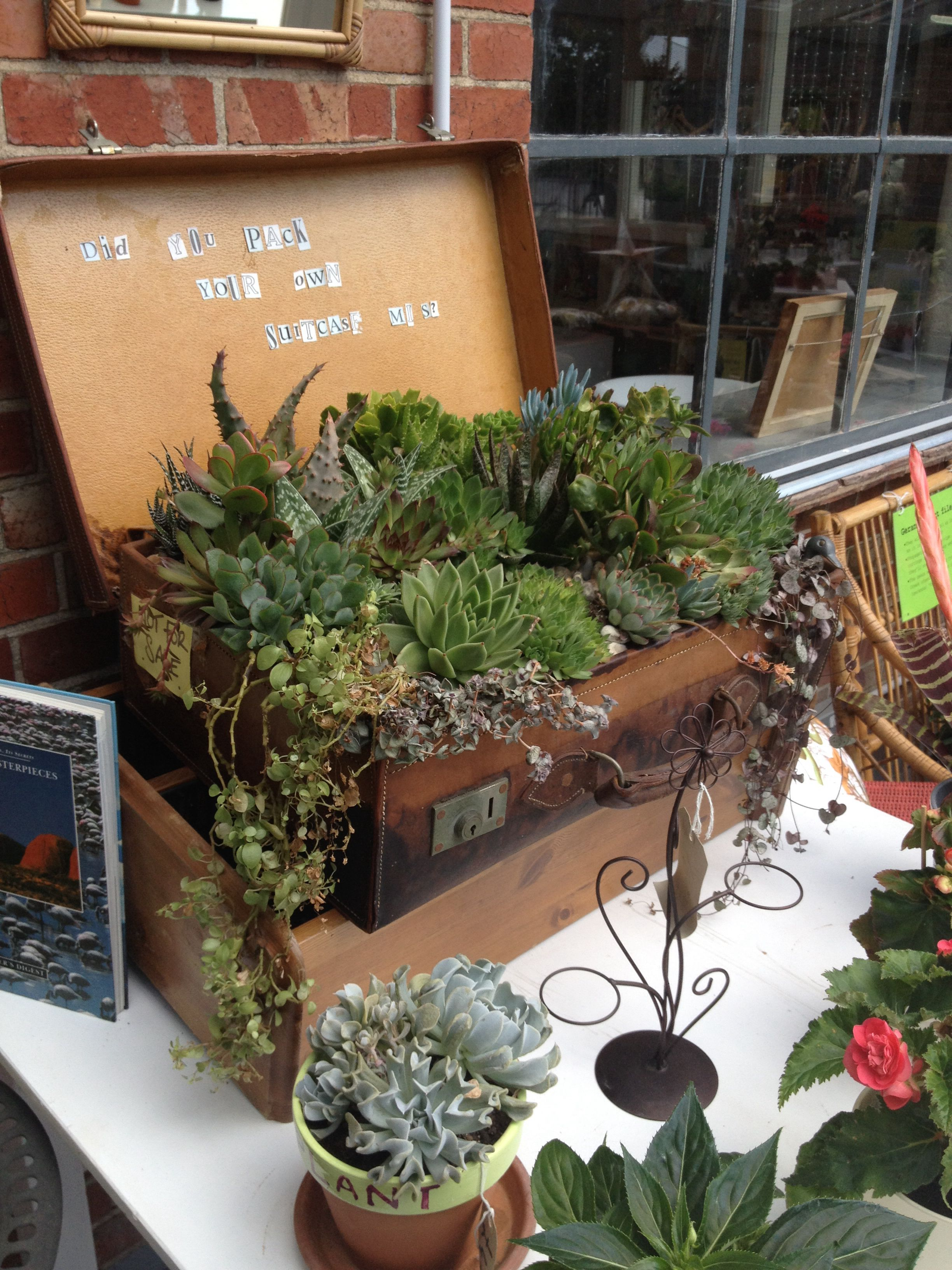 Planted suitcase at Emmaus recycling and garden centre in Brighton ...