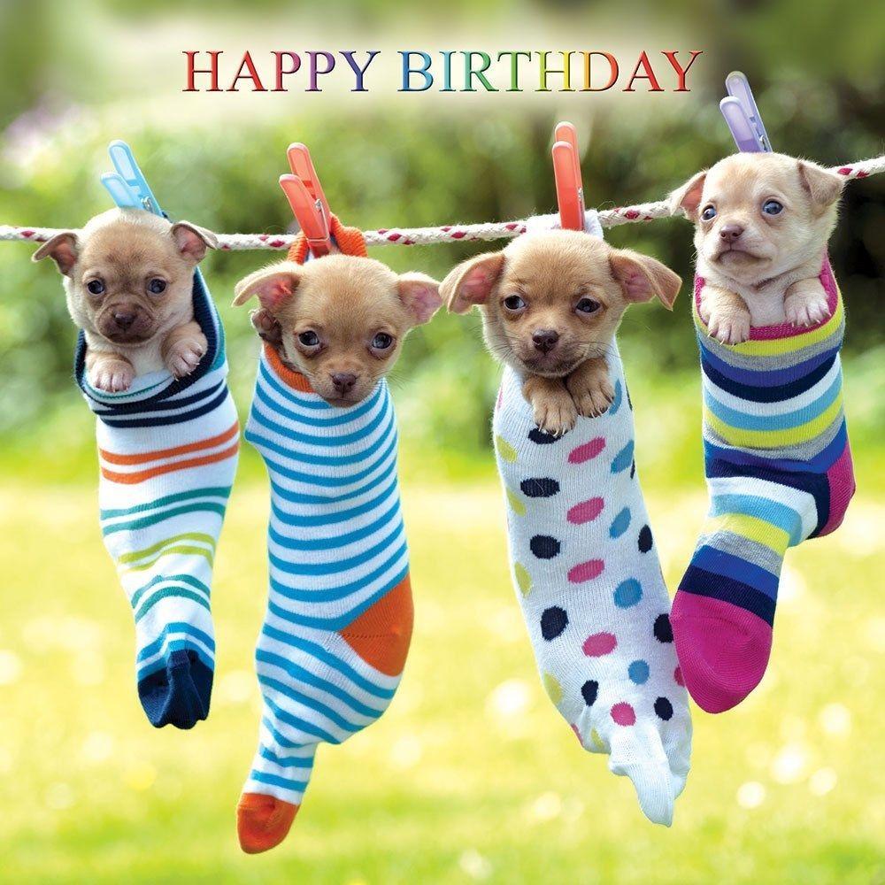 T.H.E. Curious Dog Shop Greeting Cards eBay Home