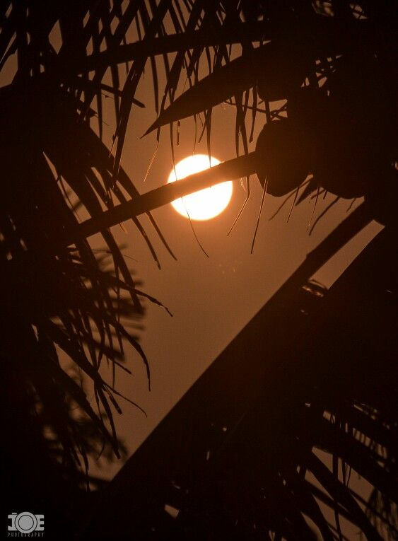 another full moon day in kerala india the frame shows a coconut