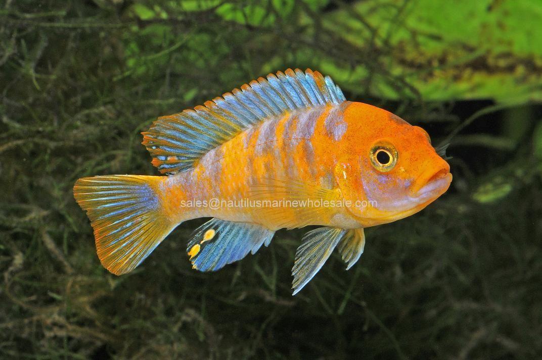 Pin On Online Fish Browsing