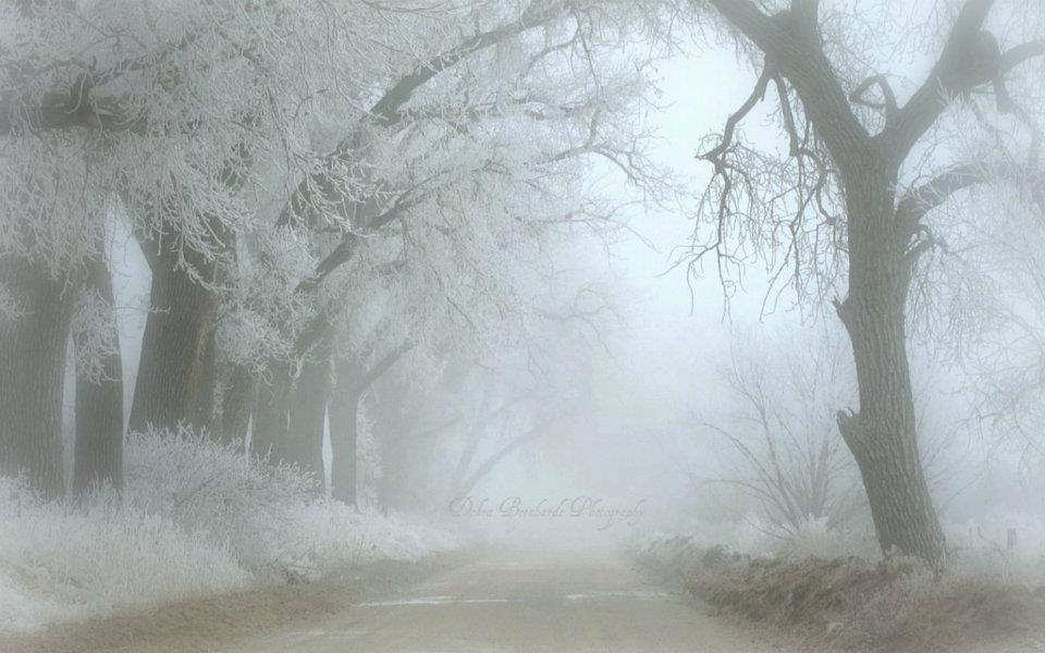 WINTER ICE ON TREES