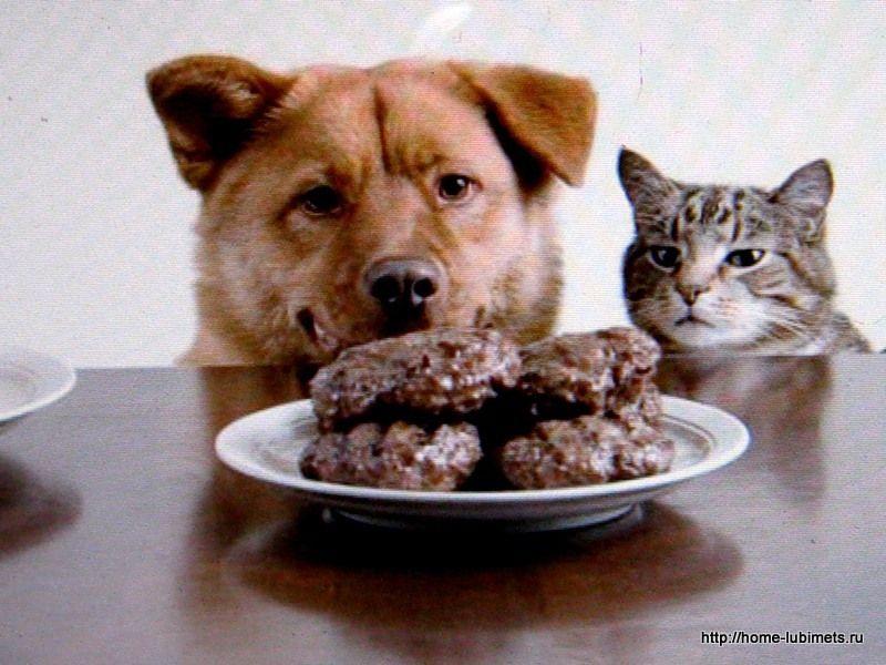 картинка собака и котлета ездить