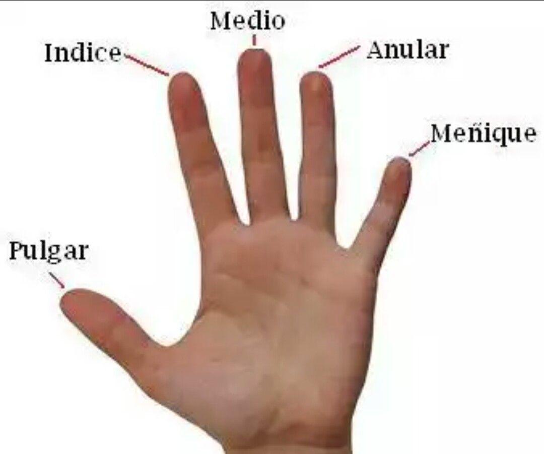 Nombres De Los Dedos De La Mano Nombres De Los Dedos Dedos De