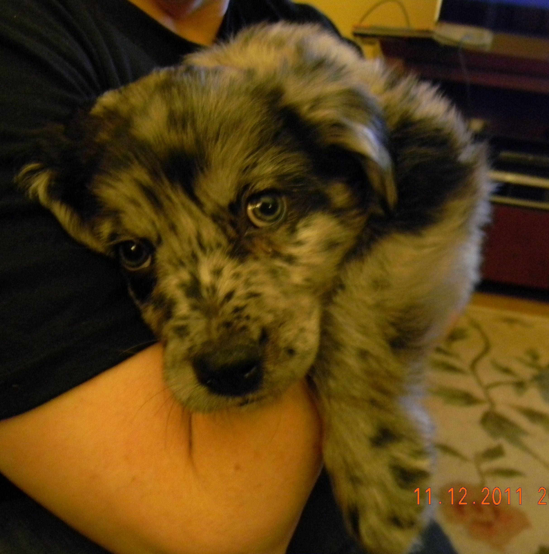 Barkley 10 weeks