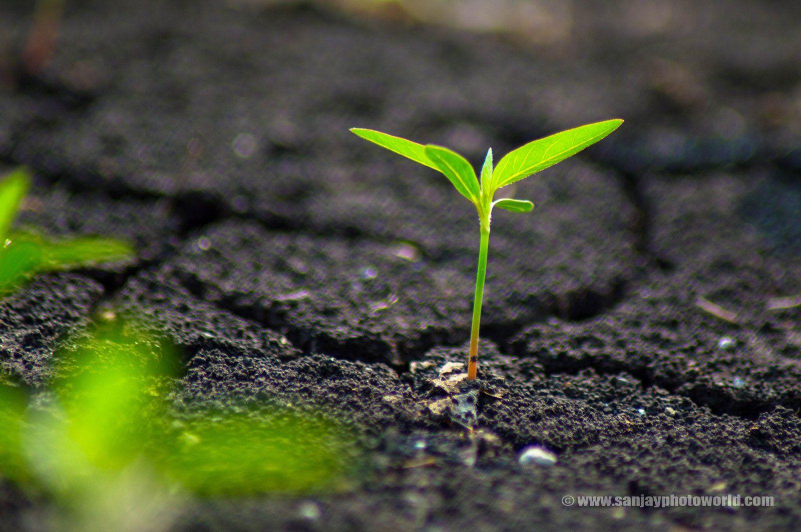 sedum plant hd wallpaper - photo #20