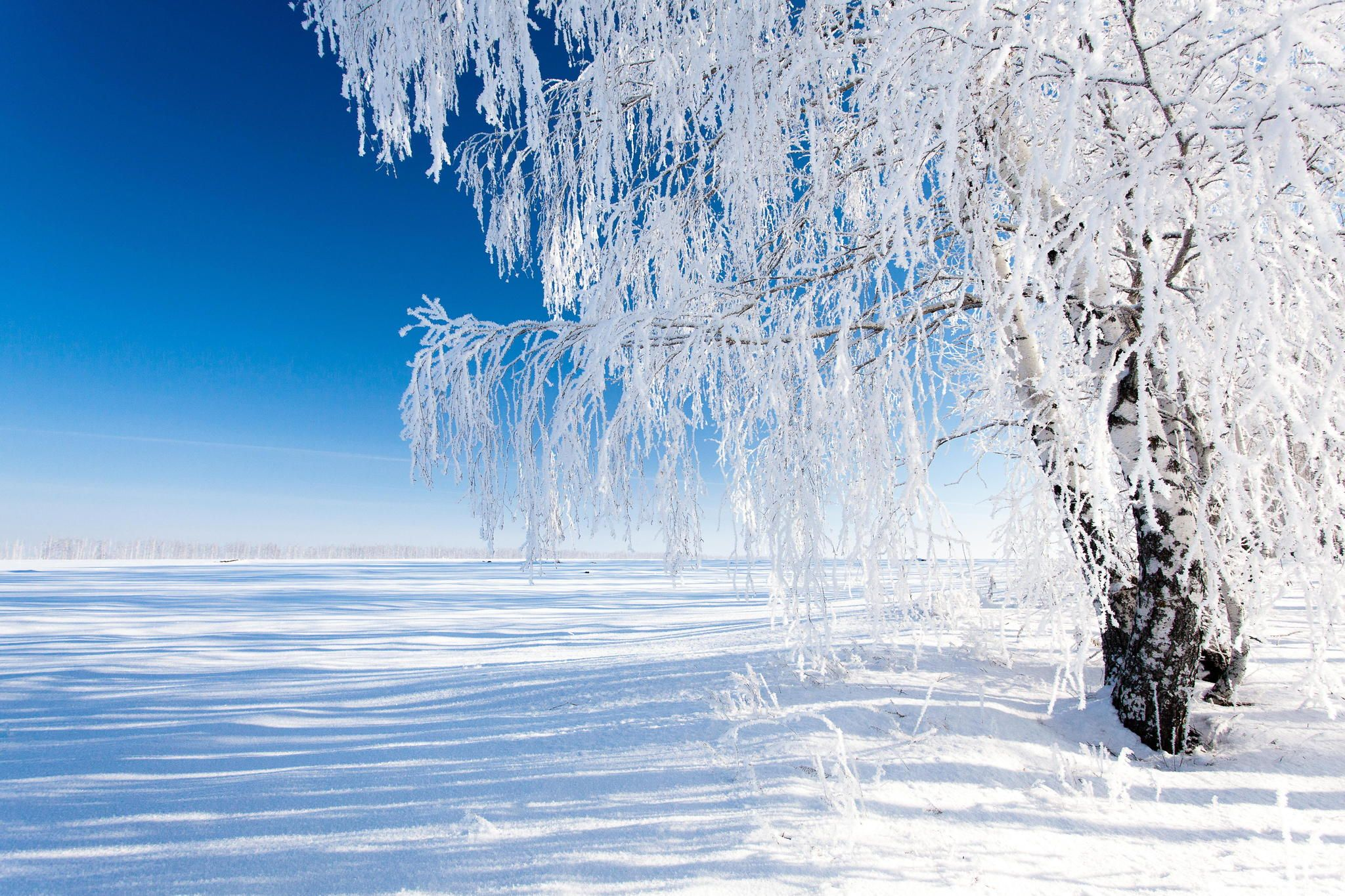 """""""Great Winter"""" by Denis Belyaev on 500px ~ This is another great winter landscape photo from the Russian backwoods."""