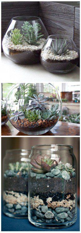 Indoor terrarium succulent gardens. If there is no hole, some absorbent matter should be put into the bottom with the pebbles/rocks.