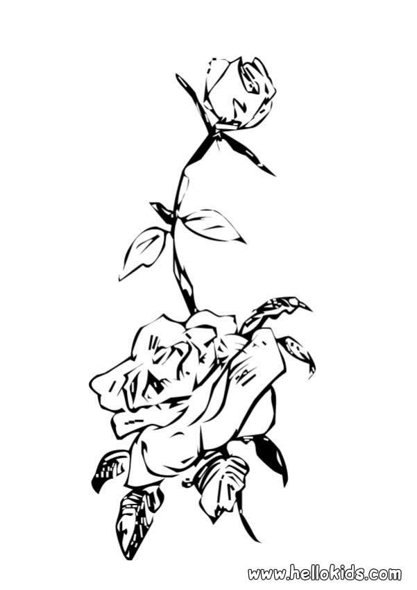 You can print out this Wild rose coloring page. Perfect coloring ...