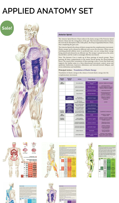 https://movementmantra.com/product/secret/ Anatomy poster boards ...