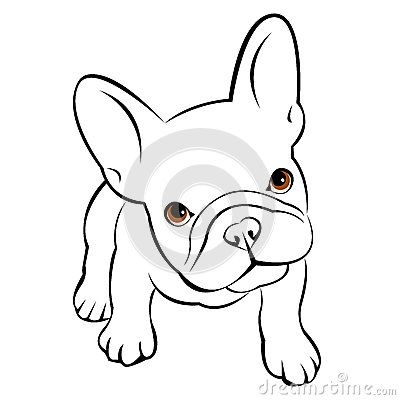 Bulldog Dog Animal French Vector Illustration Pet Breed Cute