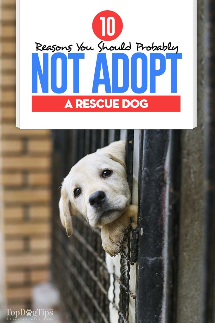 10 reasons you should not adopt a rescue dog in 2020