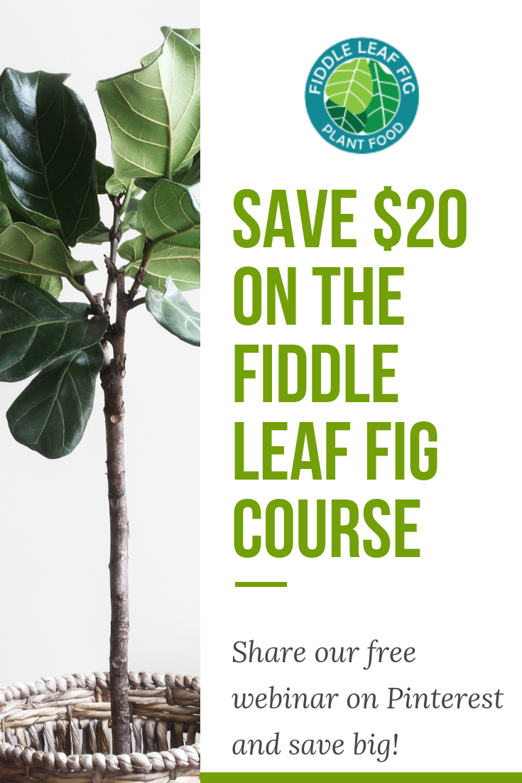 Want to save 20 on lifetime access to The Fiddle Leaf Fig
