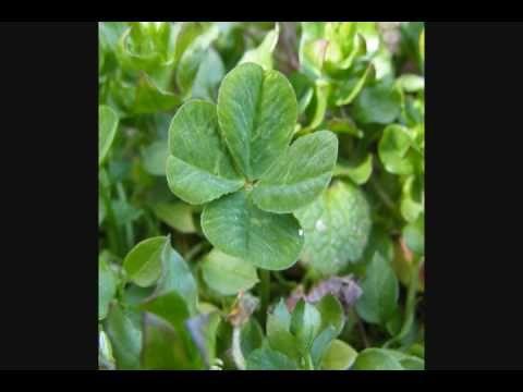 MoZella - Four Leaf Clover