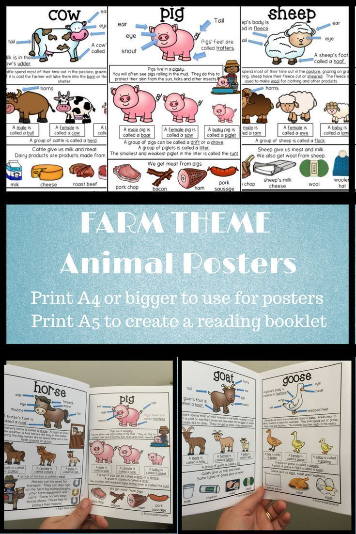 Farm Animals Literacy Posters | THE FARM: Farm themed worksheets and ...