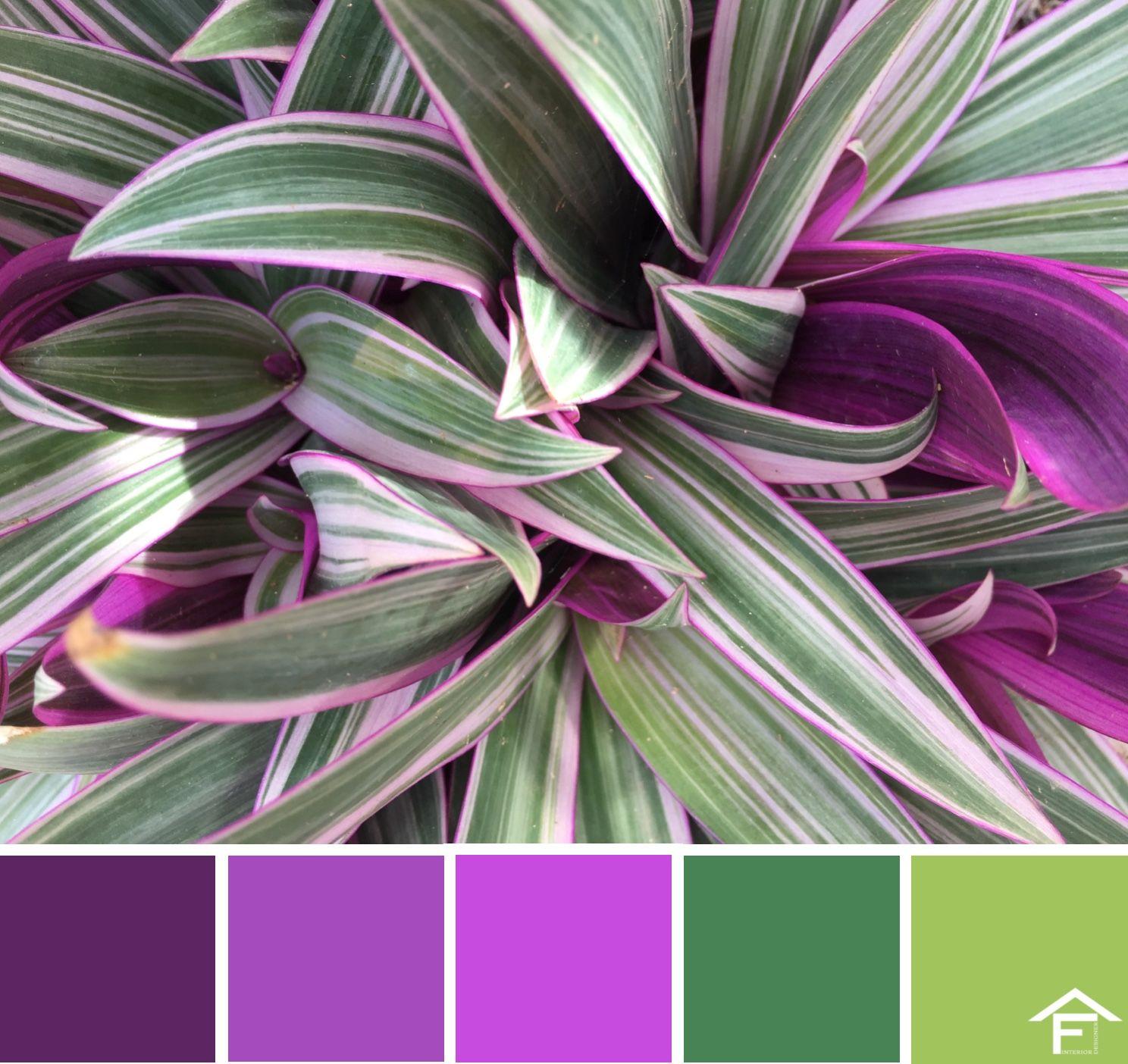 Palette colore piante giardino tendenze stili for Combinazioni colori arredamento