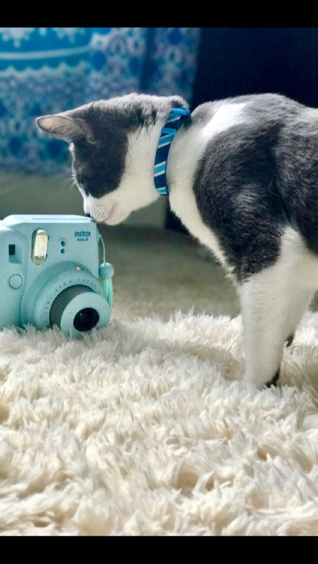I knew my cat was a photographer #cute #photo #natural #cat #kitten #kitty #adorable