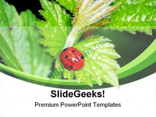 Lady Bird On Plant Nature Powerpoint Templates And Powerpoint