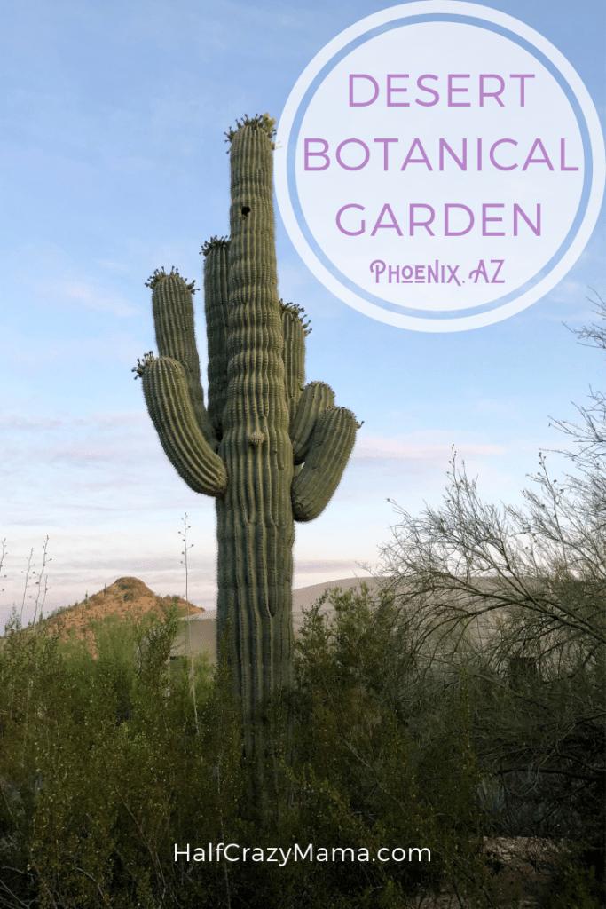 All About The Desert Botanical Garden In Phoenix Az Vacation Ideas Cactus Road Desert Botanical Garden Desert Botanical Garden Phoenix Botanical Gardens