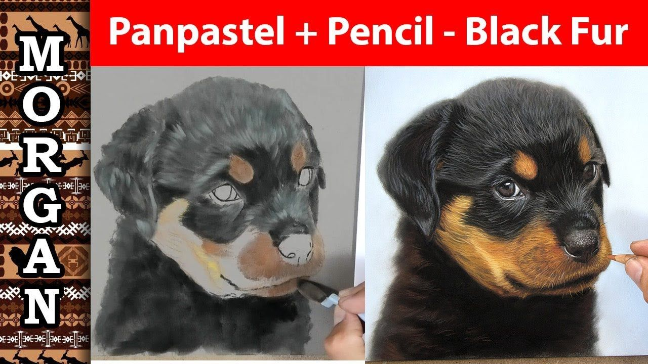 Pastel Pencil Panpastel Drawing Dog And Black Fur Youtube A