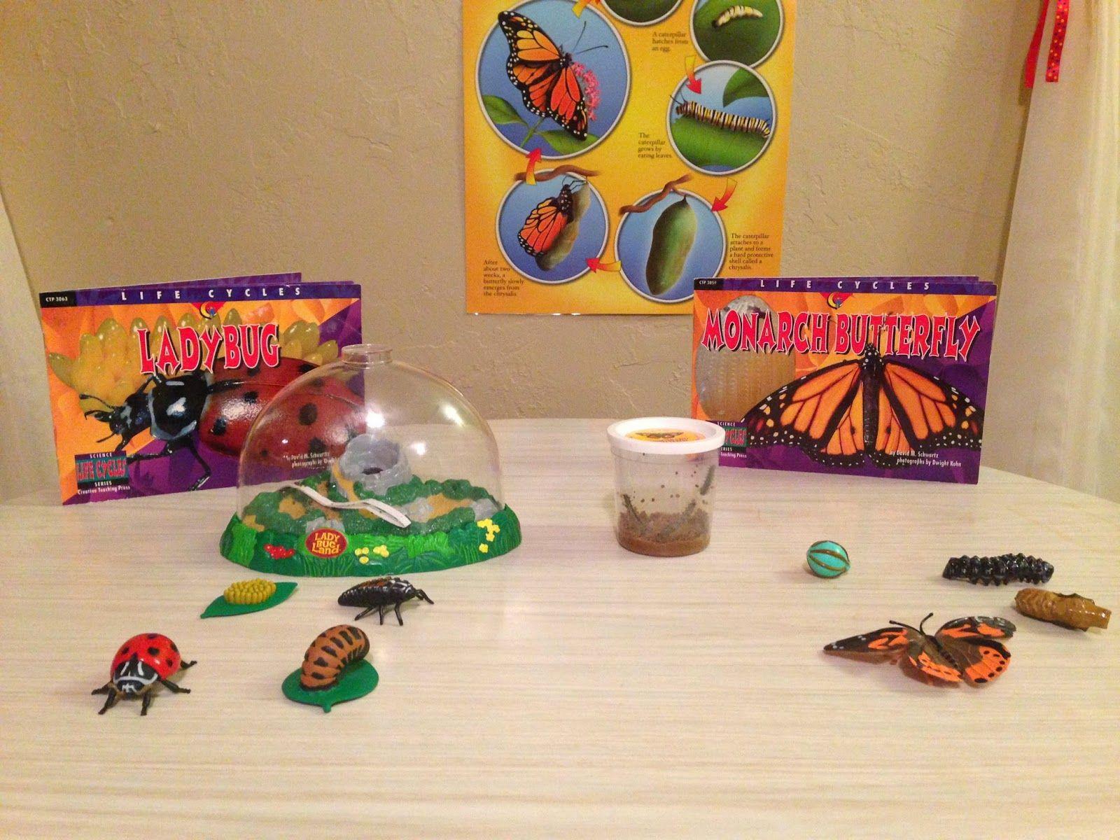 Caterpillars And Ladybugs