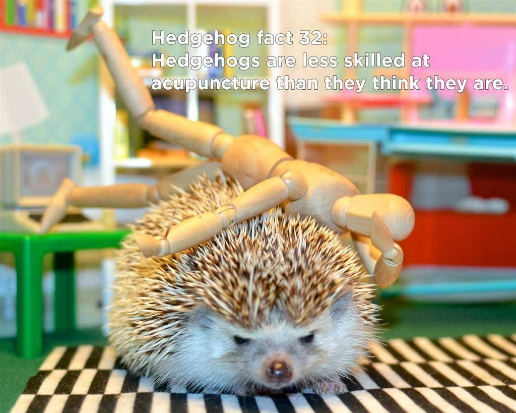 db3f15492 These hedgehog facts are all to true, amazing, and mind-blowing that we don' t even need any introductory text here, though we feel compelled to put ...