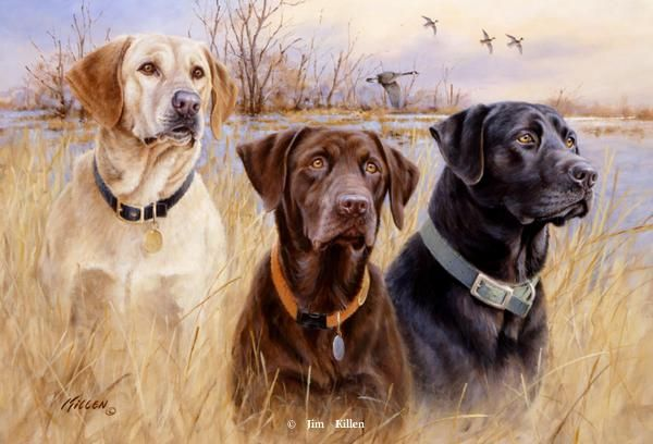 Great Hunting Dogs Iv Labrador Retrieversartist Proof Editionsold Out Golden Retriever Artwork Original Re Labrador Retriever Dog Retriever Dog Hunting Dogs