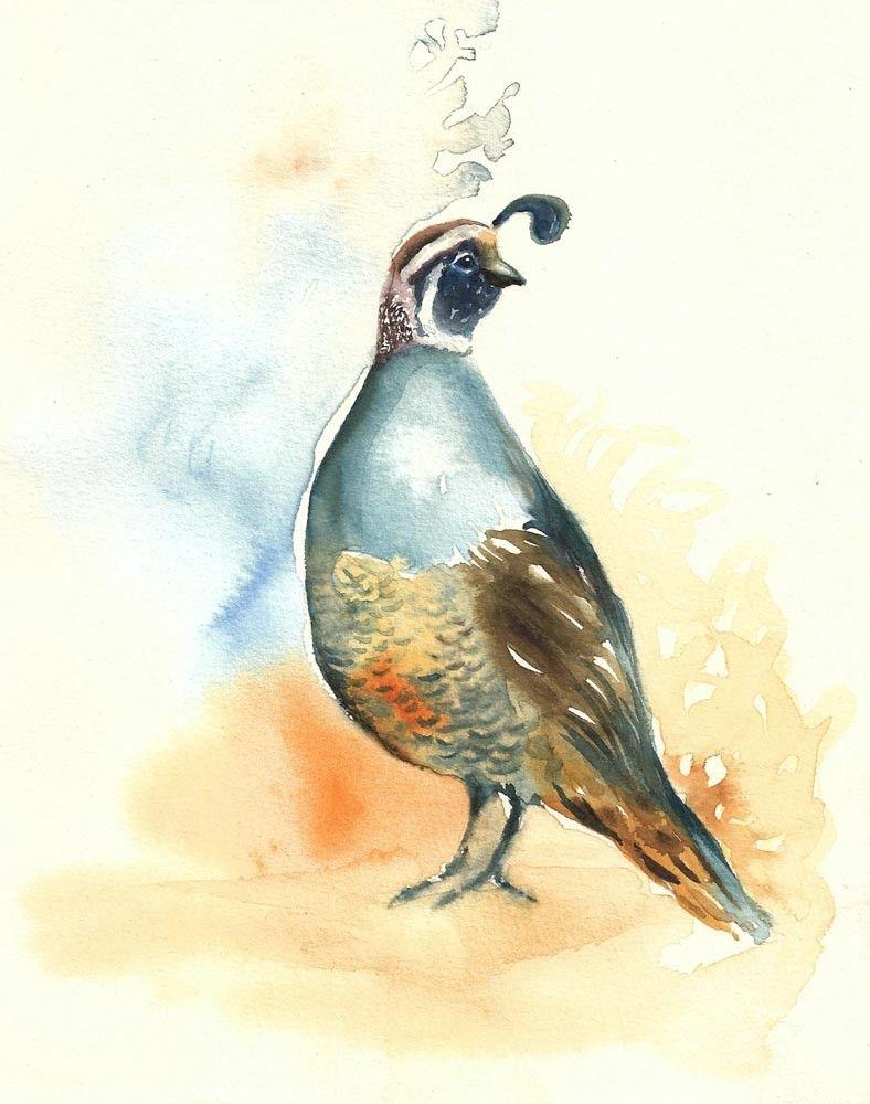 california quail by dimdiart