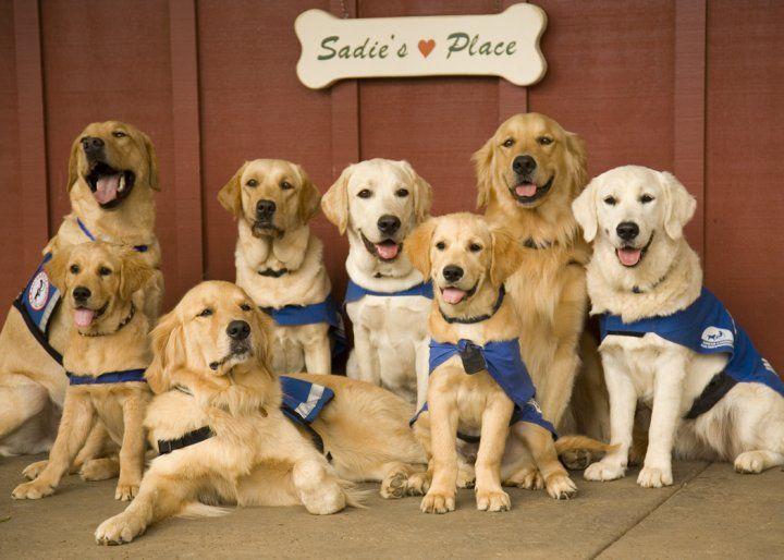 Hawaii Canines for Independence, Makawao, HI
