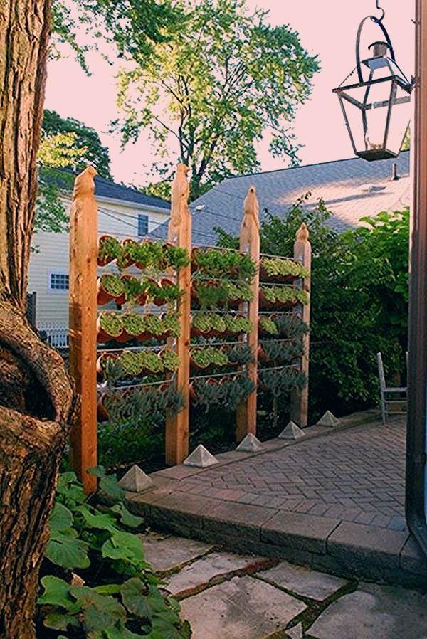 Photo of Den üppigen Sichtschutz im Garten akzentuieren