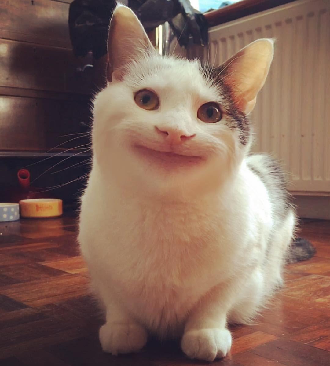 Best 22 Cat Memes Face | Cat memes, Cats, Cute animals