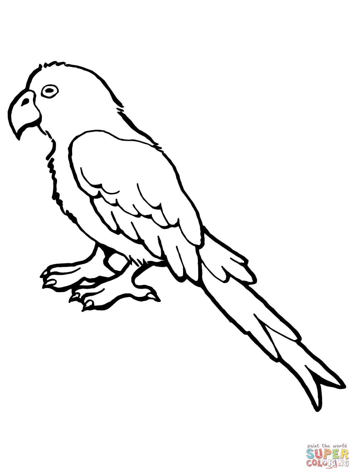 Parrot Bird Super Coloring Bird Coloring Pages Parrot Drawing Animal Templates