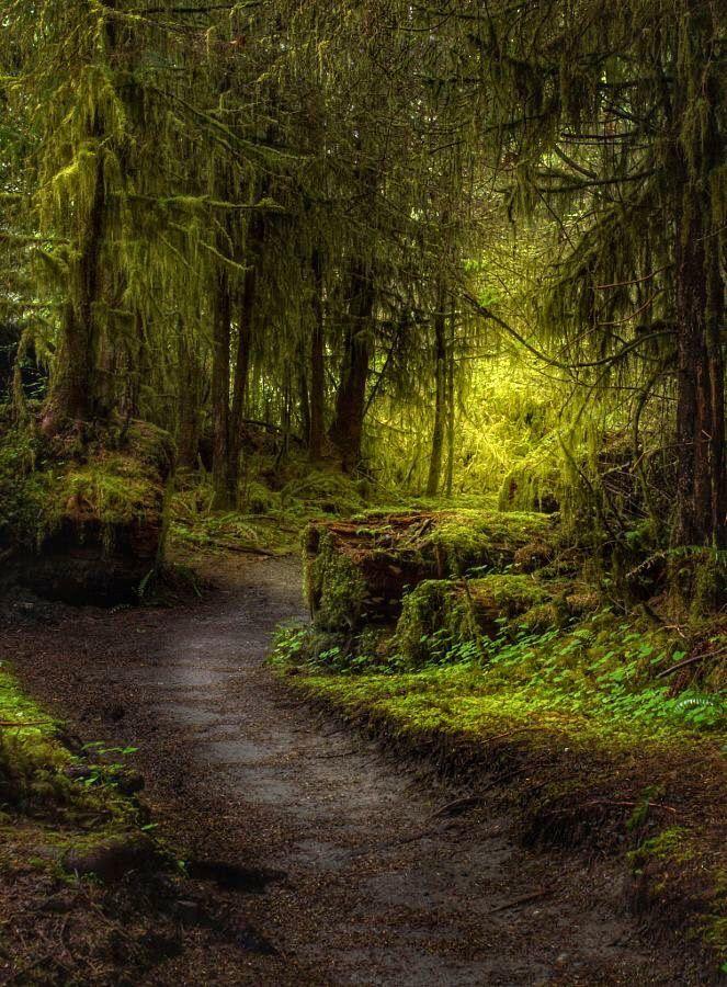 фото волшебный лес