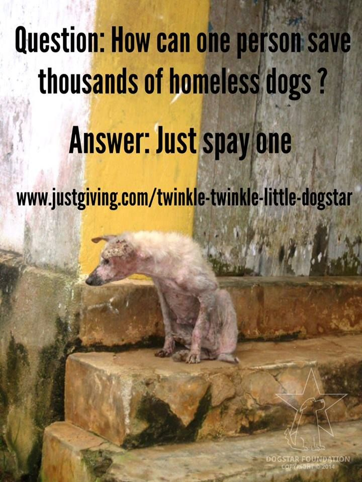 Question: How can one person save thousands of homeless ...