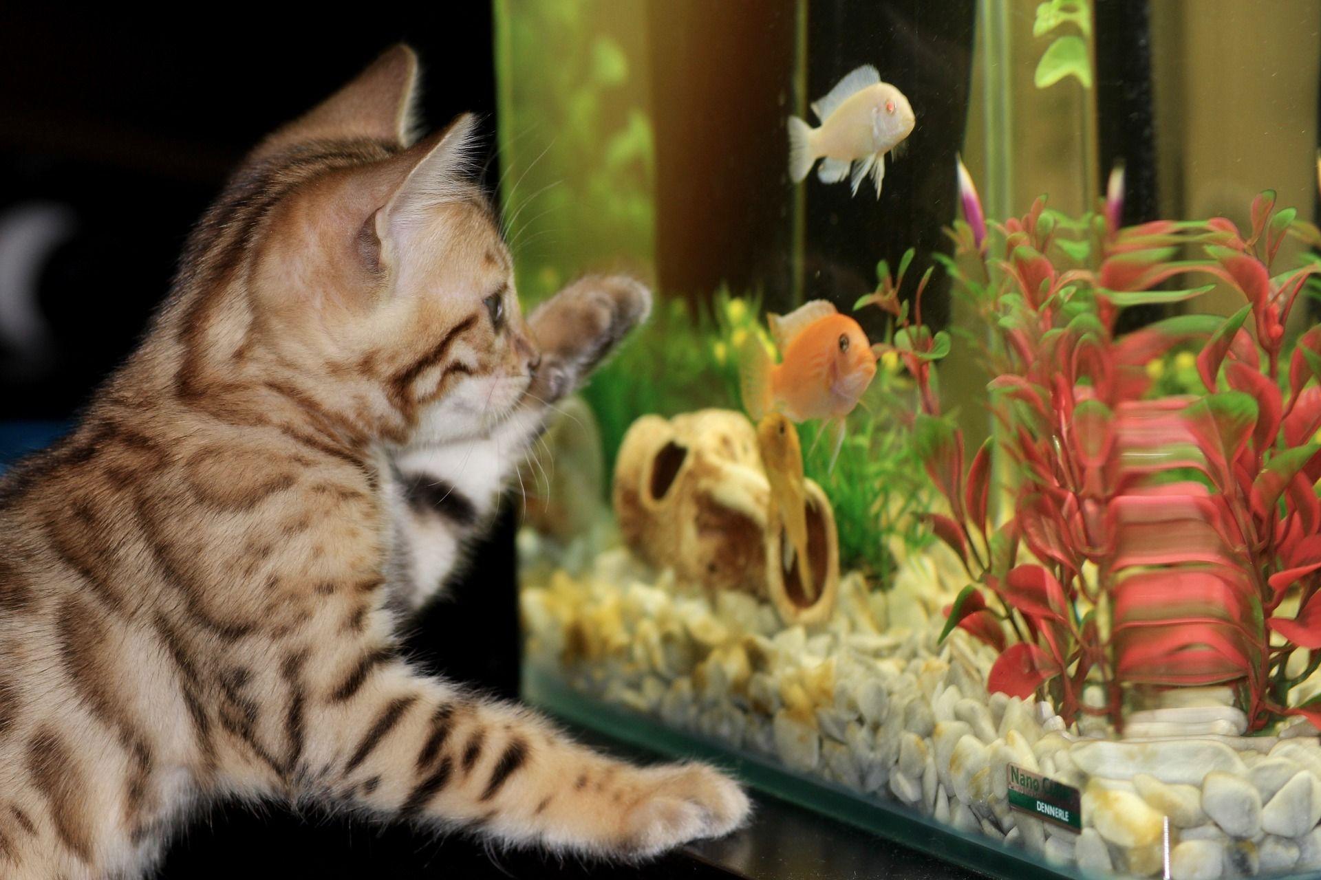 55 Gallon Fish Tank Guide Here S What You Need Betta Fish Aquarium Fish Antibiotics