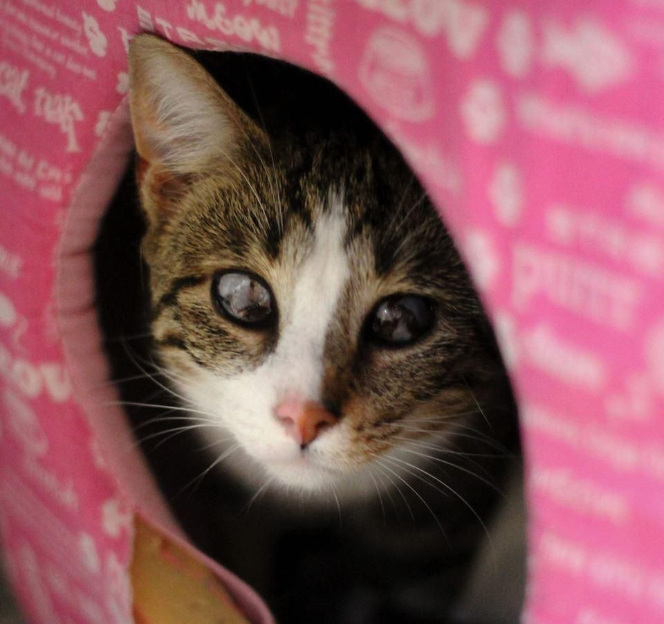 Adopt Jolie On Petfinder Saving Cat Cat Adoption Animal Help