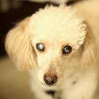 Rj 2209 Dog Adoption Breeds Animals