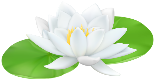 Water Lily Transparent PNG Clip Art Image Flowers nature
