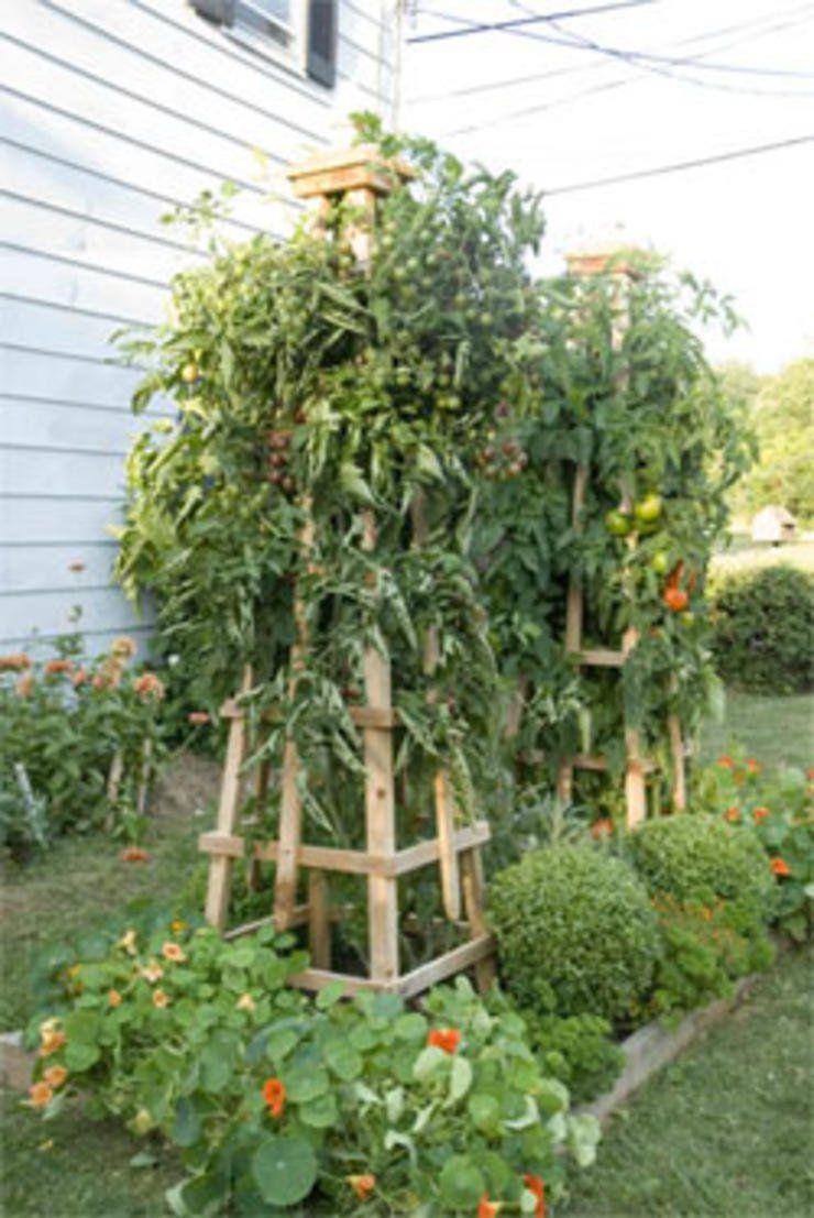 Tomato Tower Plants Tomato trellis, Tomato garden