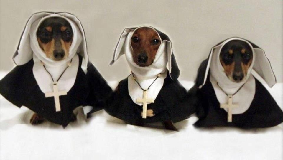 Weeny Nuns Dachshund Nun Catholic Cross Jesus God Funny