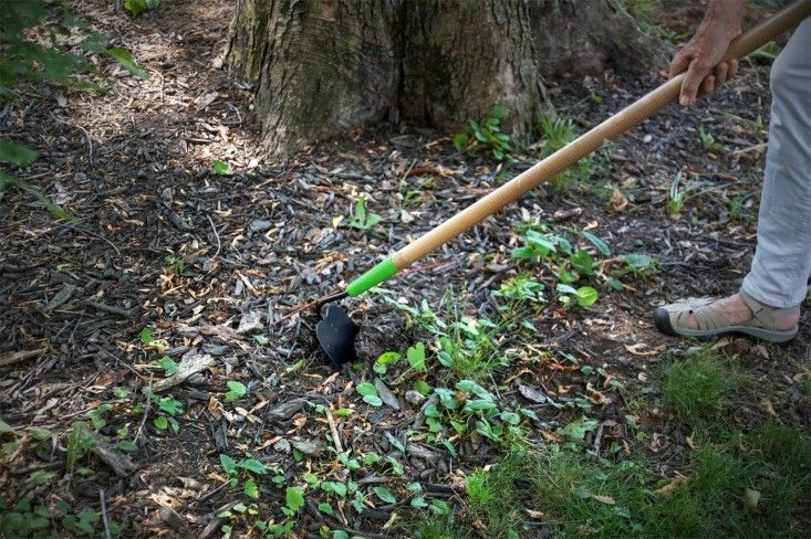 Effective at quickly clearing large swaths of weeds with shallow roots, a hoe is very useful in the vegetable garden, or wherever there is a lot of room in between desirable plants. Remember that a hoe is more of a chopping tool than a digger or a rake. To use it, make quick, downward, shallow strokes to cut weeds at the soil line. Be careful not to dig too deep as disturbing the soil can actually encourage dormant weed seeds to grow. For this reason, be sure to apply mulch right after you…