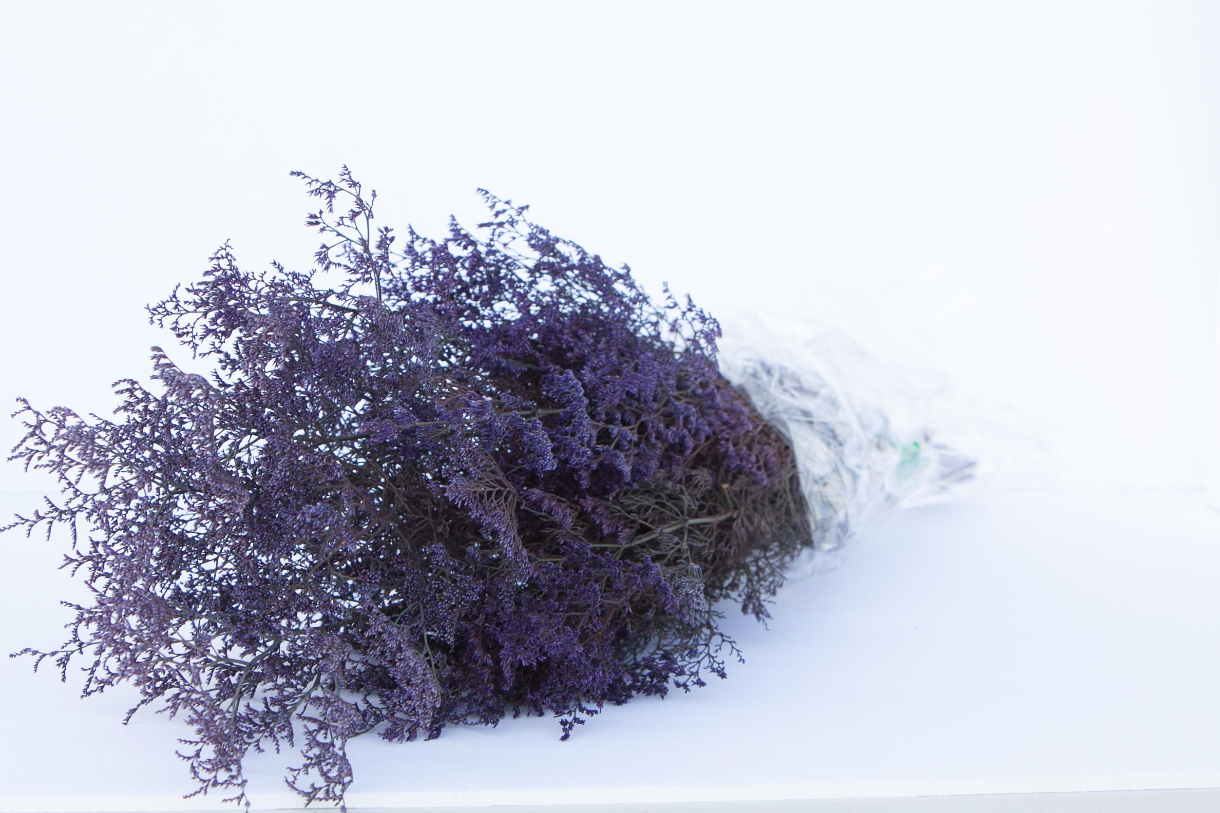 Preserved Dried Caspia Dyed Purple Preserved Misty Preserved Caspia Purple Flowers Filler Flower Diy Fowers Purple Caspia Purple Flowers Flowers Diy Flowers