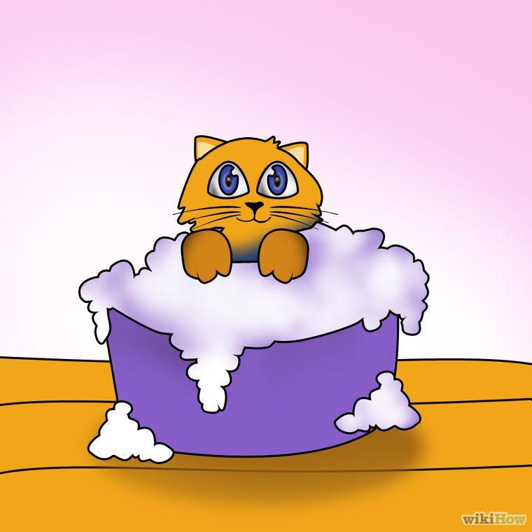 Shampoo a Kitten for Fleas Flea shampoo for cats, Buy a