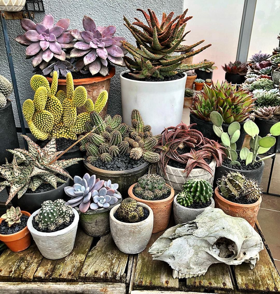 Pin by gem gossip on home decor pinterest earthy cacti and feelings